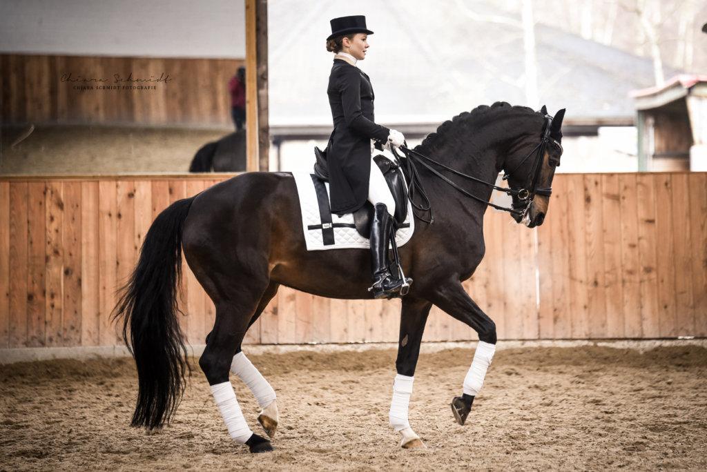 Junge Dame trabt mit einem Dressurpferd