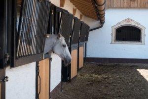 Reitimmobilie finanzieren mit der Reiter&Ross Finanzierung, Wie viel kostet ein Pferd im Monat