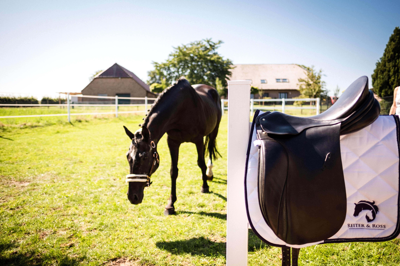 Reiter und Ross Satteldecke weiß mit Pferd im Hintergrund