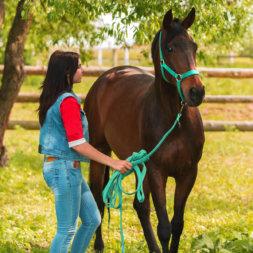 Frau führt Pferd an Halfter und Strick