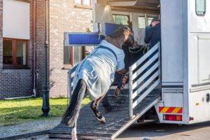 Pferd wird in Transporter verladen