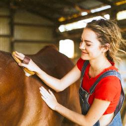Pferd wird gepflegt