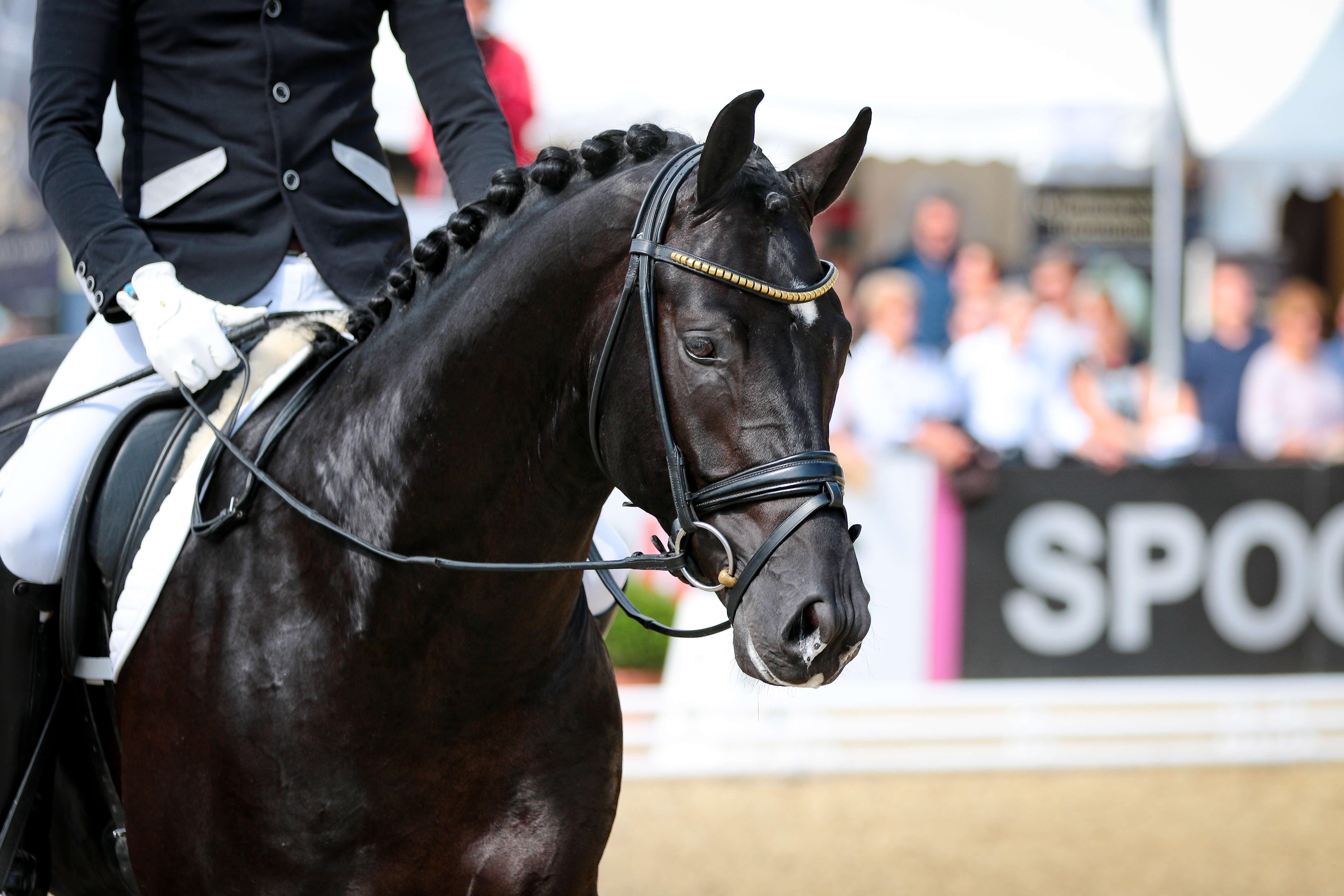 Pferd auf Turnier nach vorigem Reitunterricht