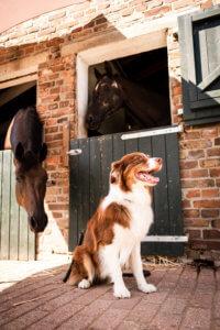 Pferd und Hund im Stall