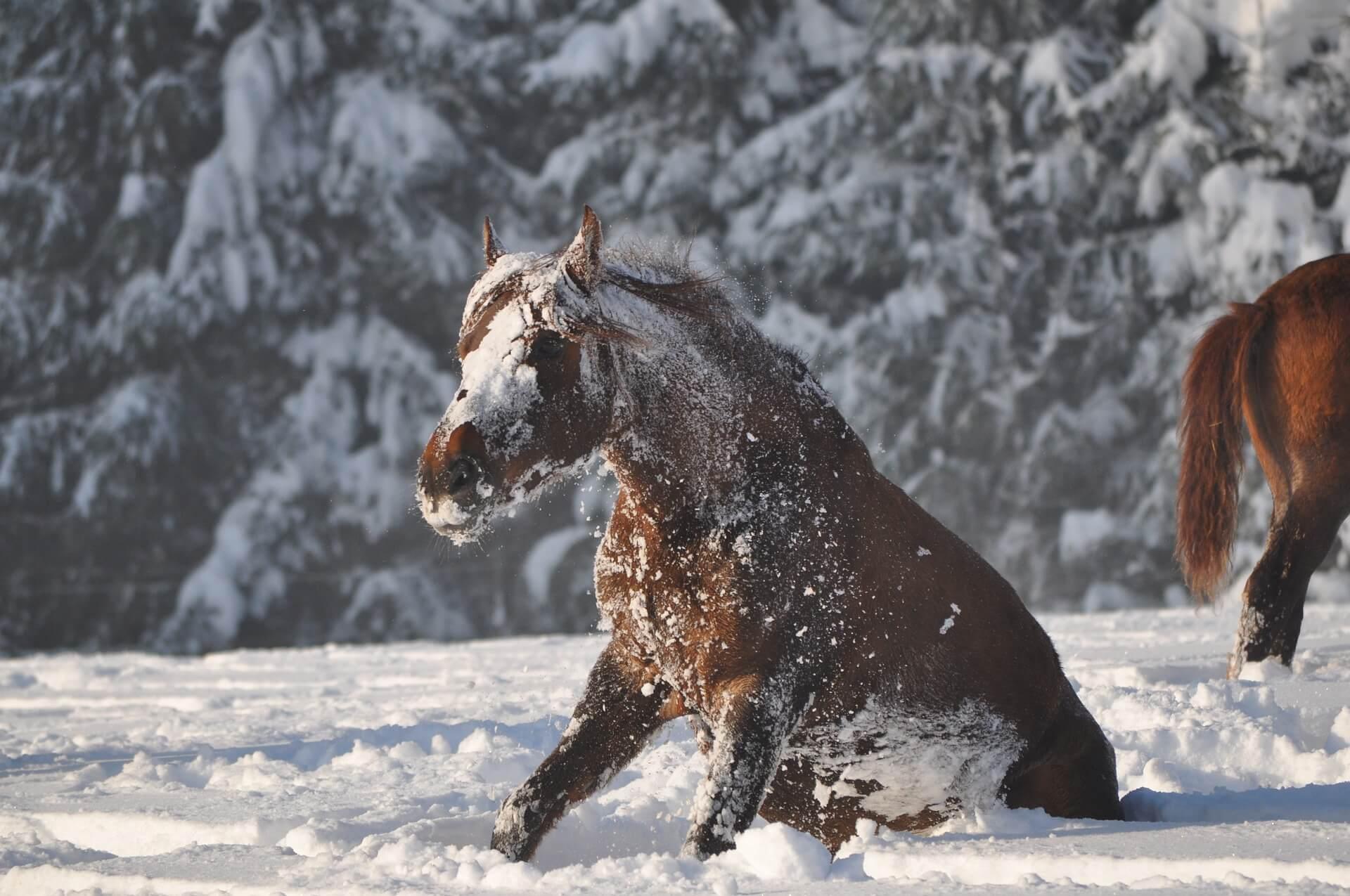 Winter Pferd Paddock